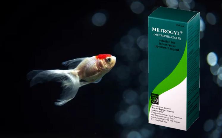 Всё, что известно про корма для рыбок