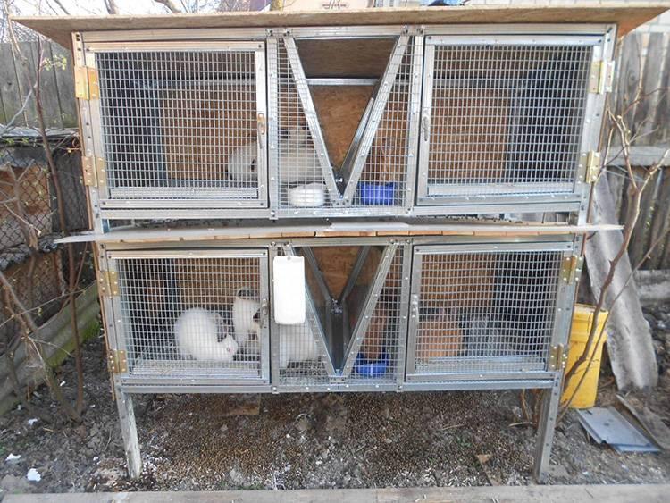 Разведение и содержание кроликов в домашних условиях с нуля