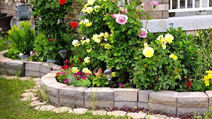Шток-розы из семян: инструкция по выращиванию и советы начинающим