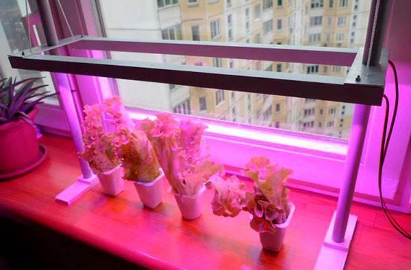 Какие выбрать люминесцентные лампы для растений