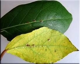 Вредители домашних растений и методы борьбы с ними