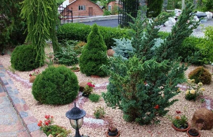 Правильная посадка и уход за кипарисом в саду