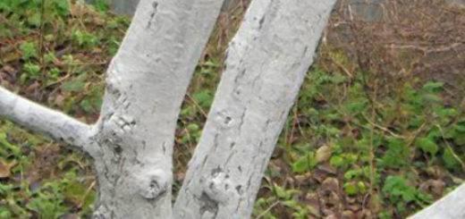 Эффективные средства для избавления деревьев от тли