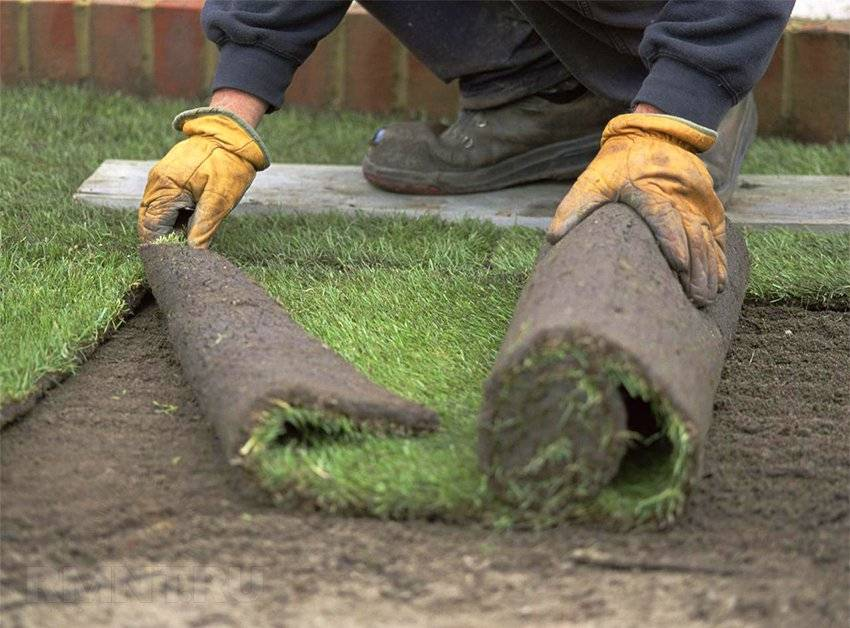 Правильная укладка рулонного газона