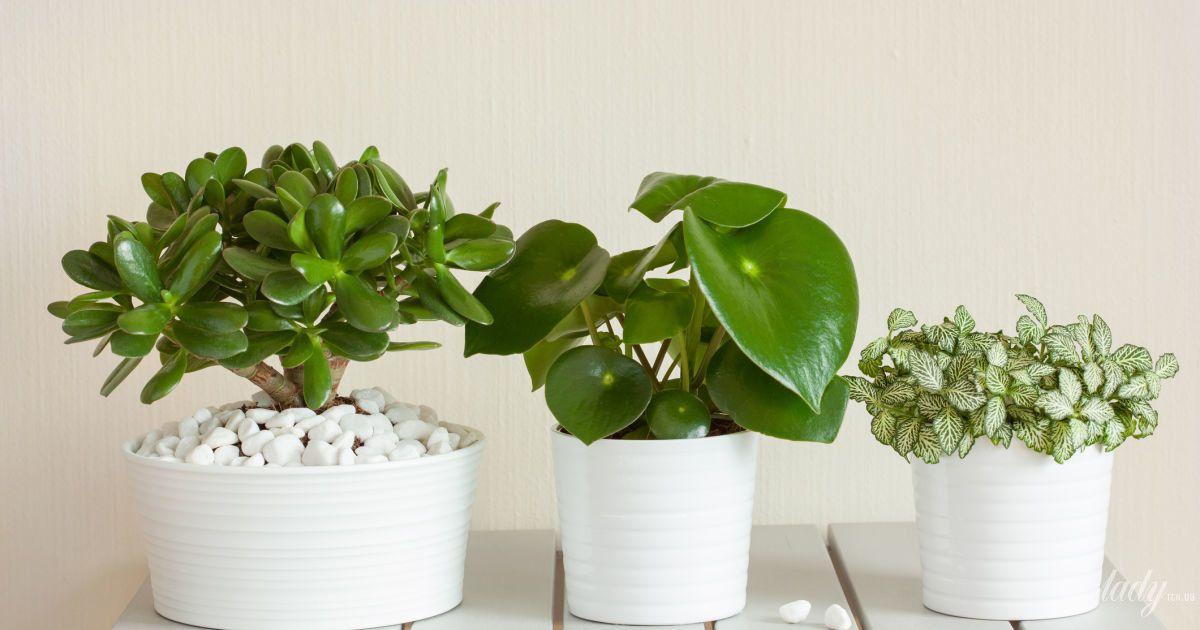 Польза яичной скорлупы в качестве удобрения для огородных и комнатных растений