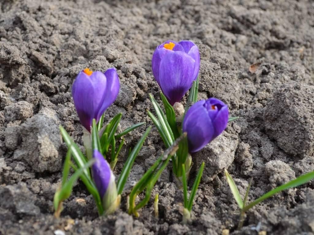 Первый приезд на дачу весной – 15 важных дел, о которых вы не должны забыть