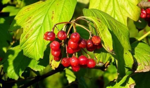 Все вредители сада – фото, названия, описания и меры борьбы