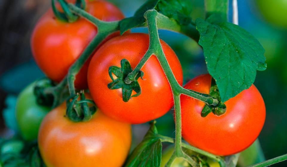 Посадка цветной капусты в 2020 году: сроки посева, выращивание и уход