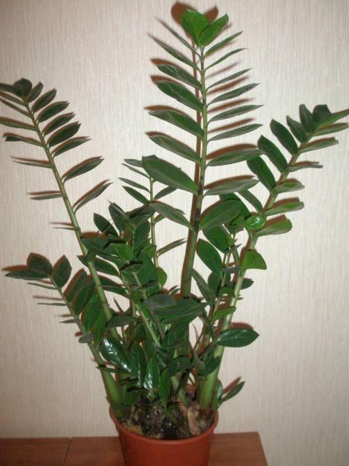 Внешний вид комнатных растений