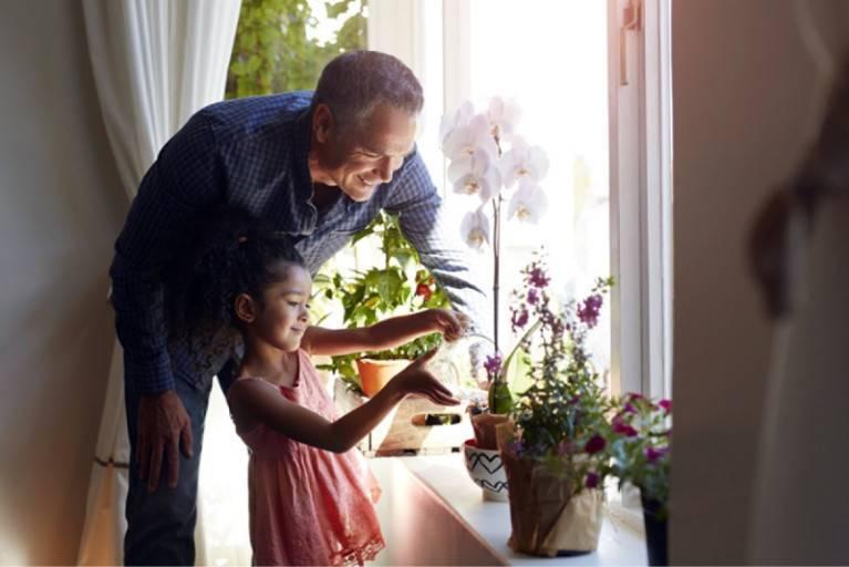 Как пересадить азалию в домашних условиях — инструкция