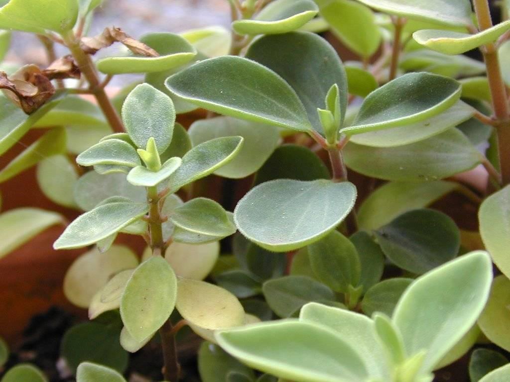 Все методы размножения растений