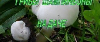 Выращивание грибов в домашних условиях: главные особенности и инструкция для новичков