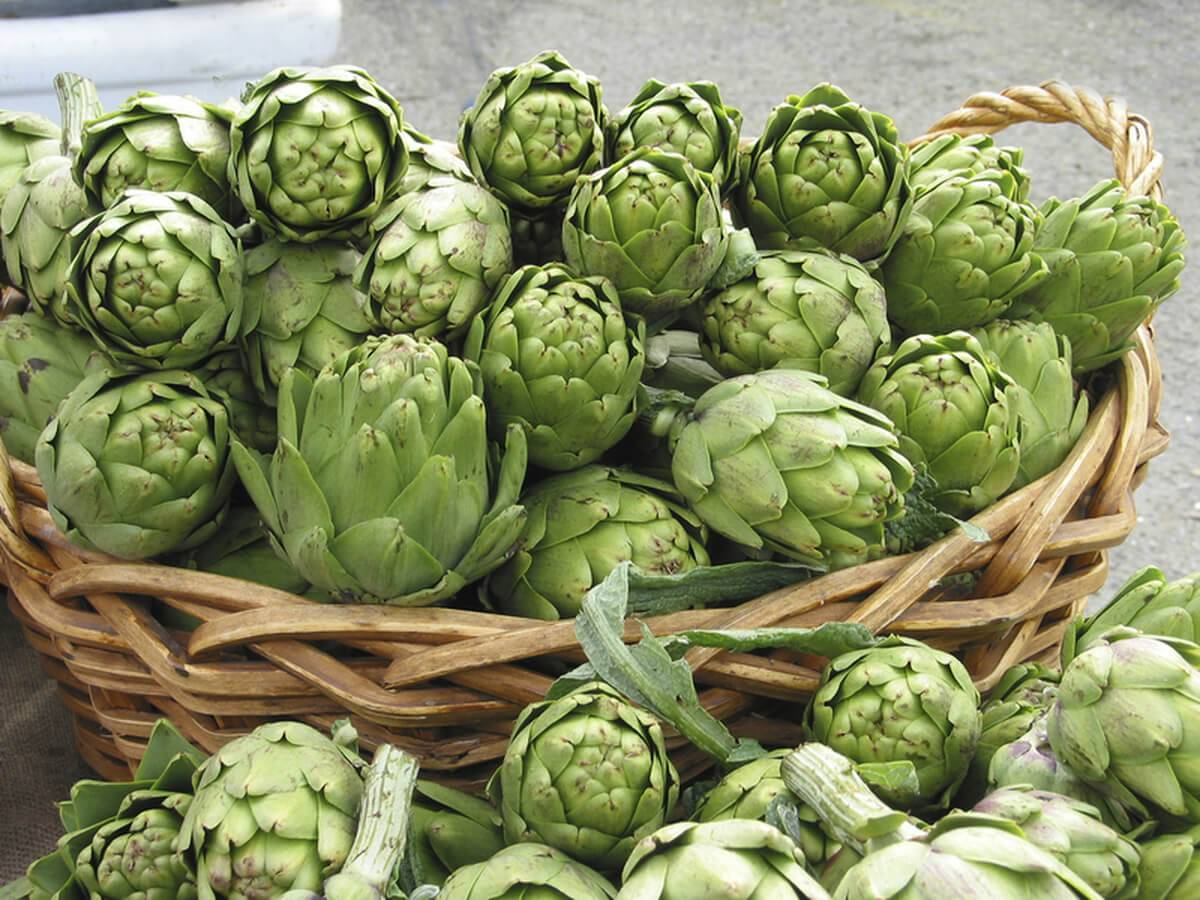 Артишоки — это деликатесы которые можно вырастить на огороде