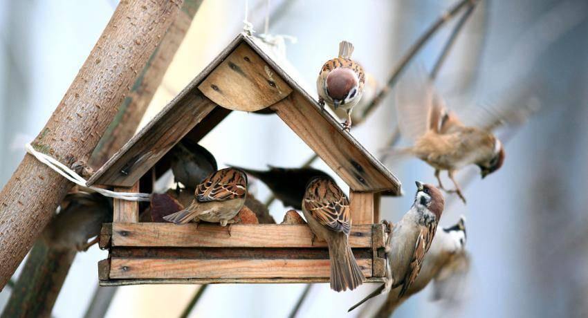 Как сделать кормушку для птиц: чертежи, фото, видео способы изготовления