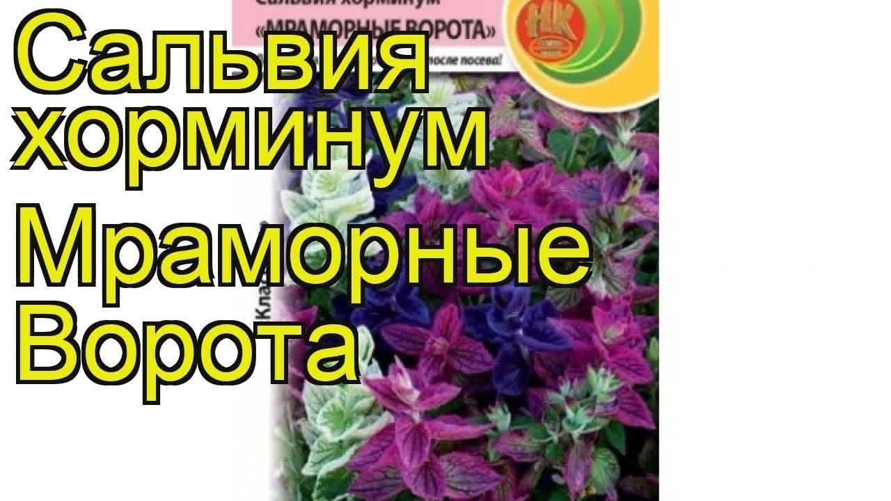 Ландшафтные растения: цветы для ландшафтного дизайна