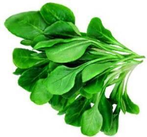 Обеспечиваем свою семью вкусным и полезным шпинатом