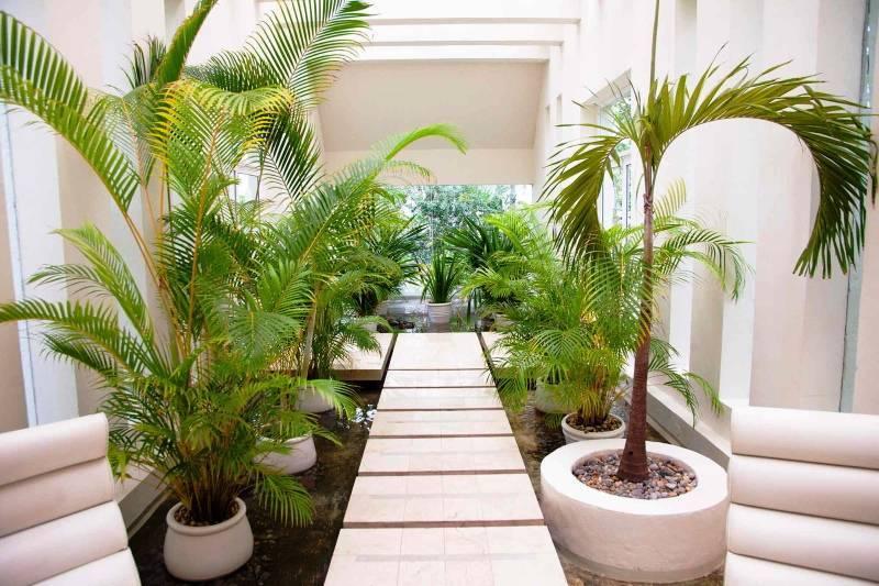 Пальма вашингтония — юг у вас дома!