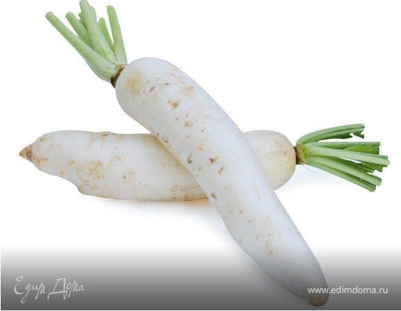 Дайкон: полезный овощ, несущий здоровье организму