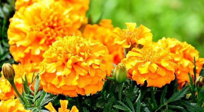 5 цветов, которые обязательно должны быть на вашем участке