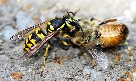 5 действенных способов изготовления отравы для пчел