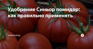 Как правильно удобрять томаты минеральными удобрениями