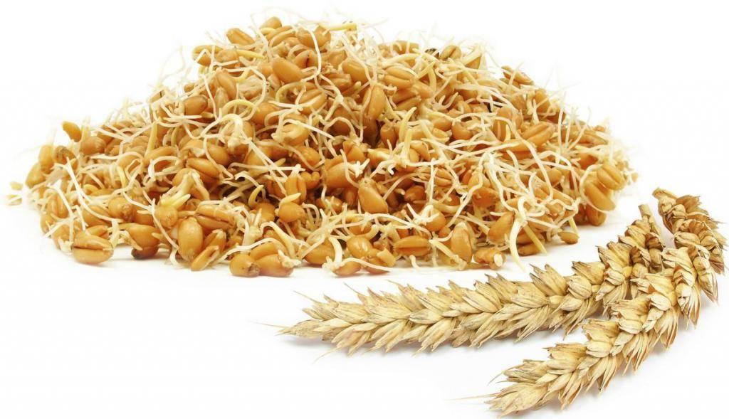 Пророщенная пшеница — польза рецепты и как употреблять