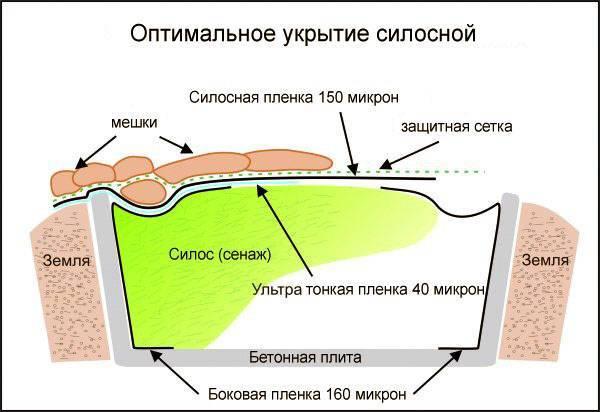 Заготовка силоса — из чего делают, как хранить, силосные ямы, видео