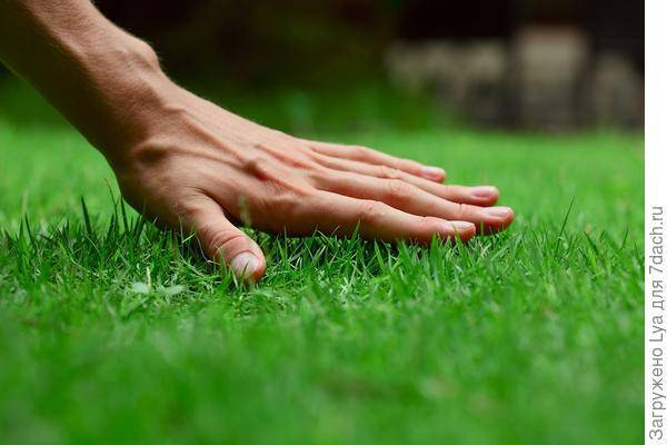 Техника по уходу за газонной травой