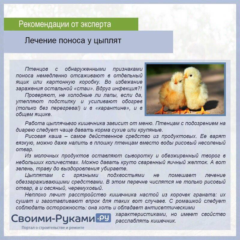 Общие рекомендации по содержанию суточных цыплят