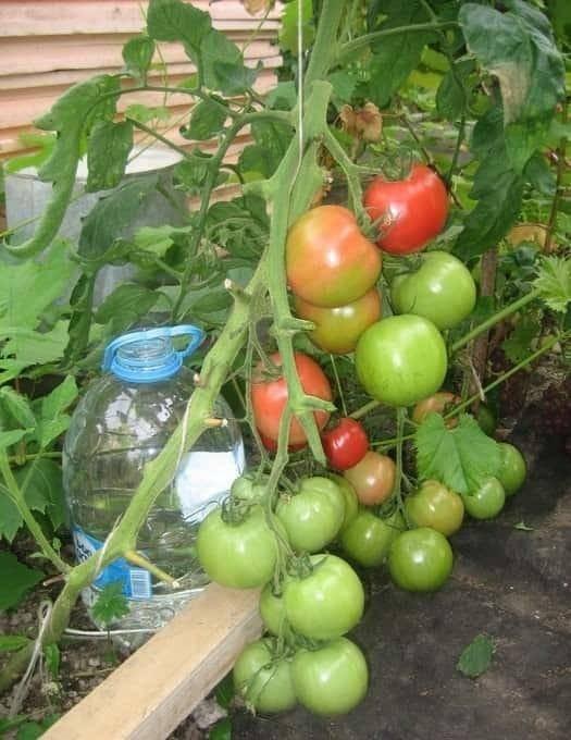 9 экзотических овощей, которые стоит попробовать вырастить на даче