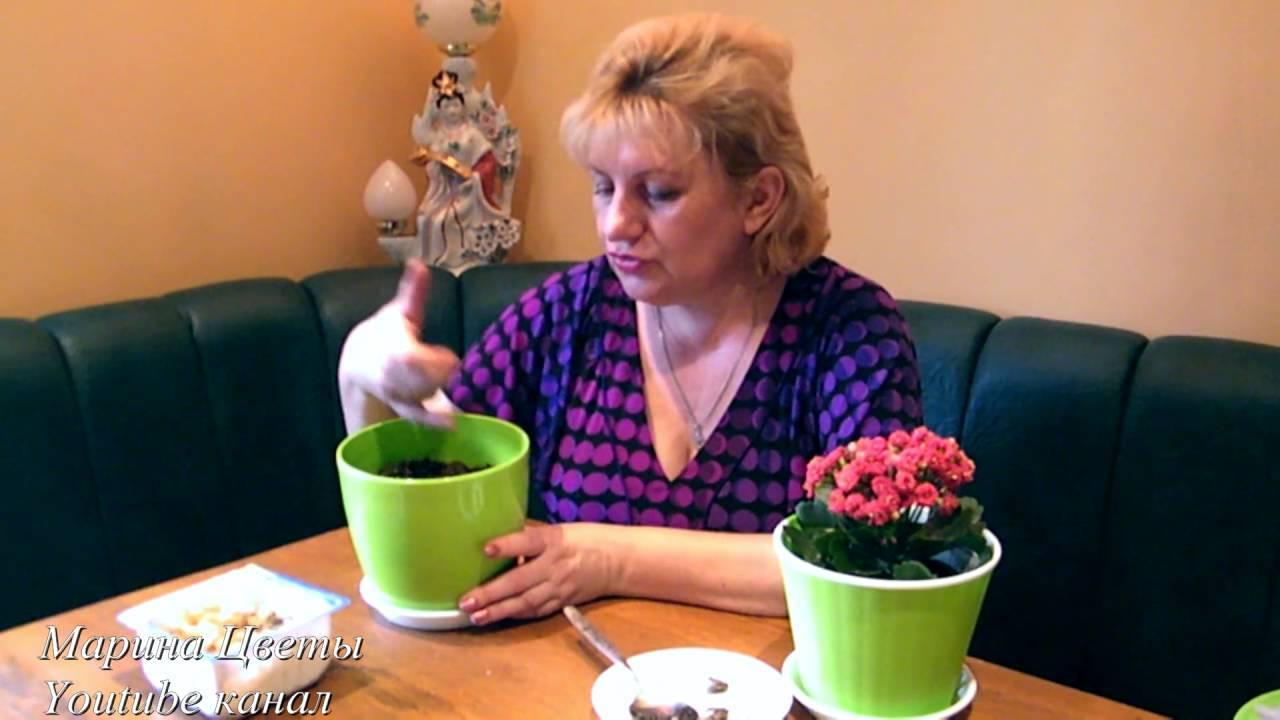 Выращивание лютиков садовых — особенности посадки весной и осенью, правила ухода, видео