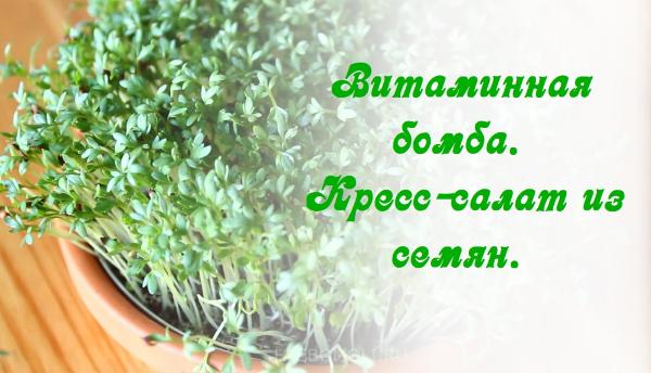 Кресс салат: как выращивать дома вкусную зелень