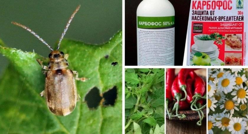 Виды садово-огородных вредителей и способы защиты от них