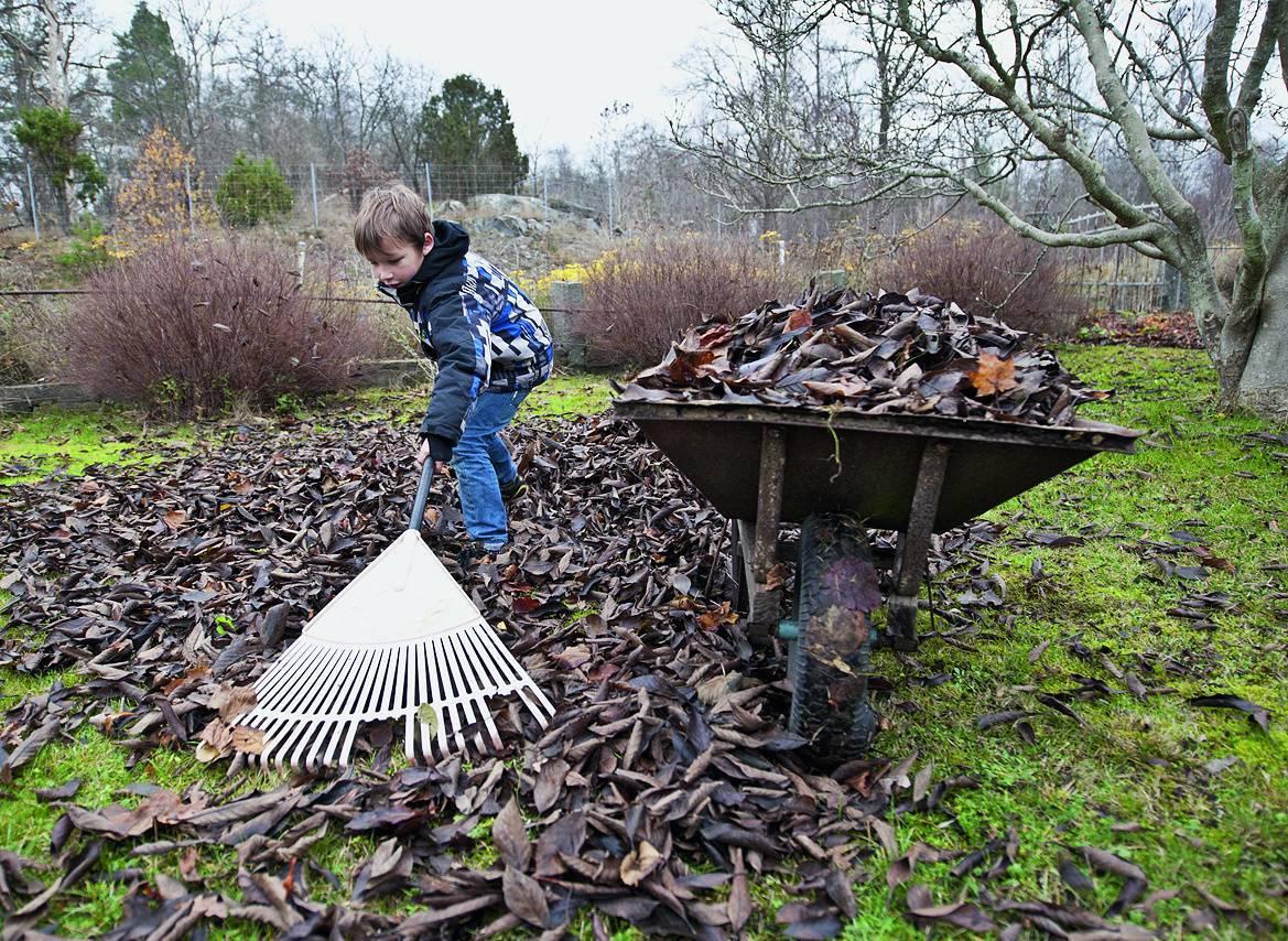 Пустая трата сил: 8 бесполезных весенних работ в саду и огороде