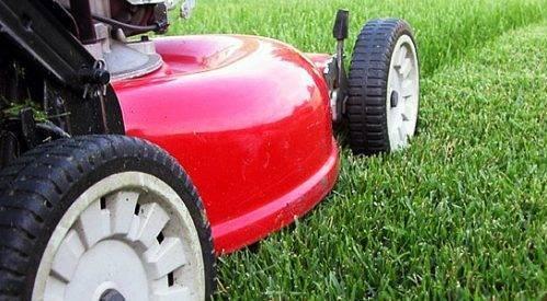 Какие удобрения для газона необходимо использовать