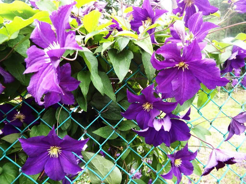 30 восхитительных декоративных растений для вашего сада