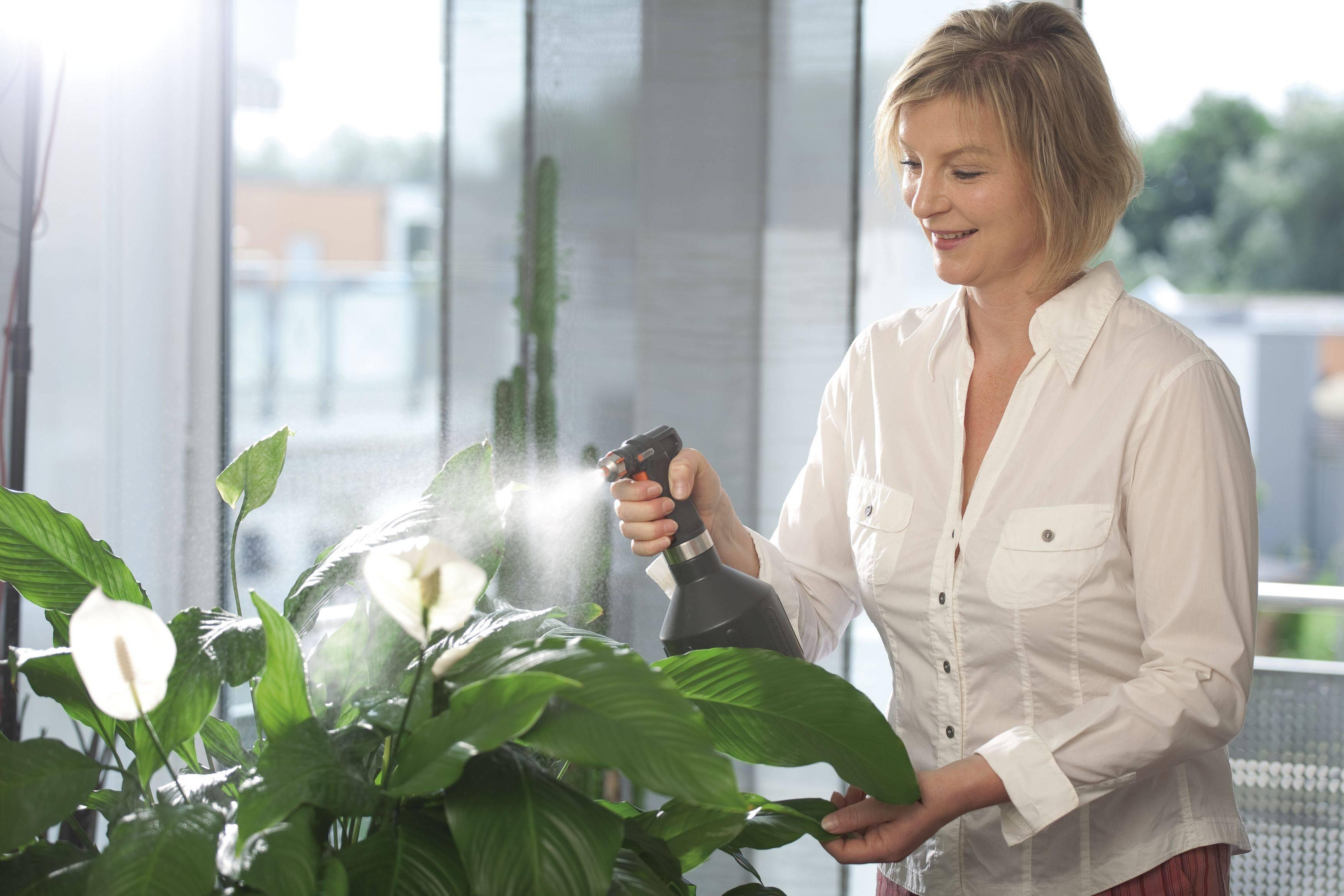 Лучшие подкормки для комнатных растений без вредной химии