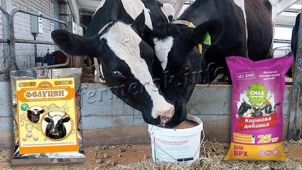 С чего начать разведение бычков на мясо, как бизнес? особенности и организация дела