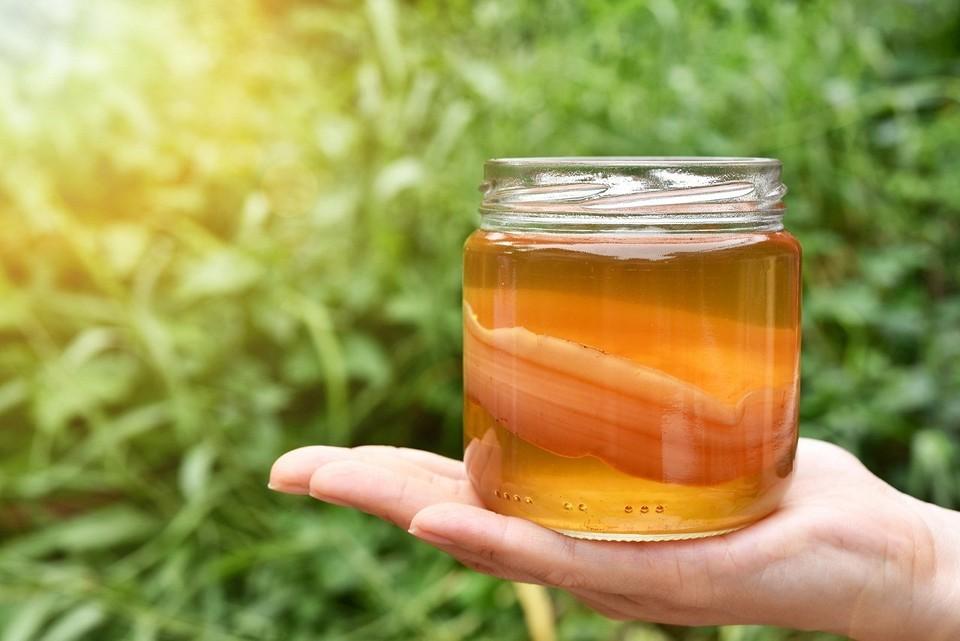 Чайный гриб. полезные свойства и противопоказания, как употреблять, выращивать и ухаживать