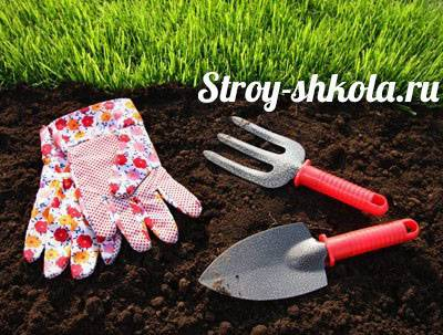 Почему осенняя посадка газона предпочтительнее, и как сеять газонную траву осенью
