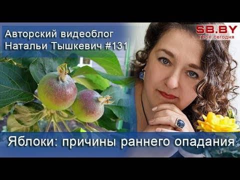 Яблоки гниют на дереве: причины и методы лечения заболеваний. как бороться с плодовой гнилью на яблоне, чем опрыскать яблоню