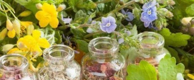 Иссоп лекарственный: где растет, когда собирать и сушить, как заварить и применять