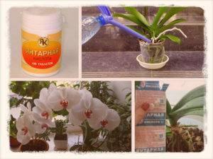 Удобрение янтарная кислота для орхидеи фаленопсис