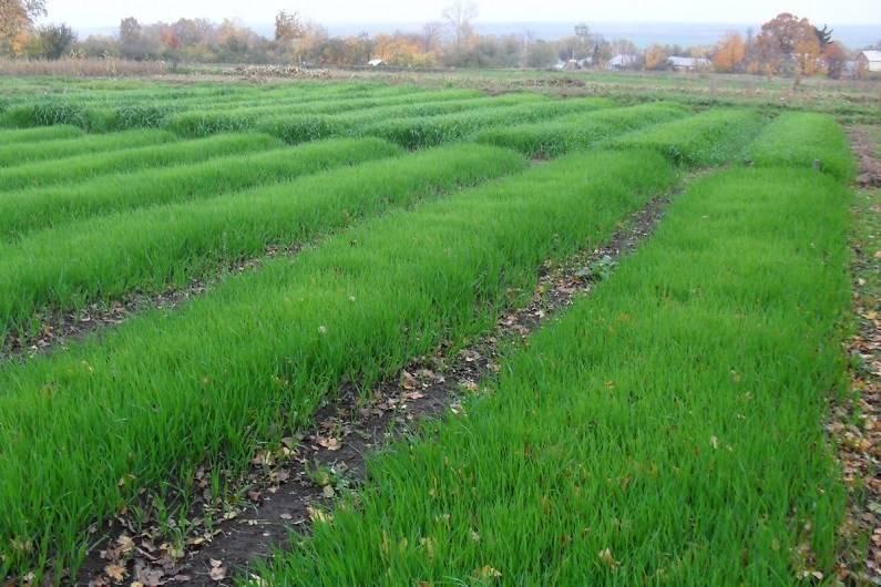 5 правил природного земледелия