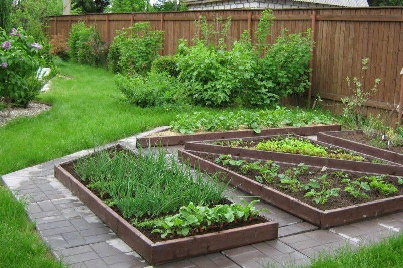 Подкормки и удобрения для овощных культур