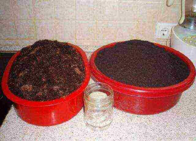Микрозелень в домашних условиях – идеальный продукт вашего рациона