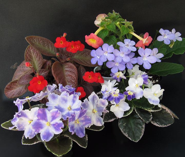 Как выращивать цветы канны в саду в сибири, посадка, уход, зимовка