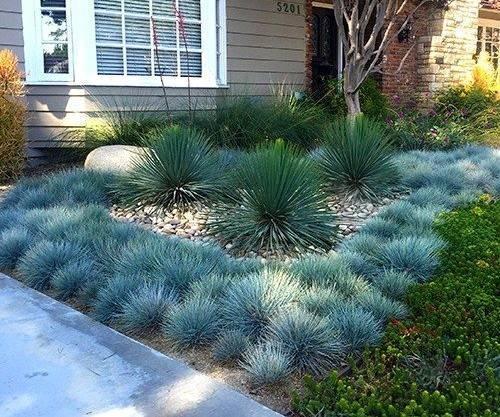 Овсяница сизая – секреты выращивания декоративной травы из семян