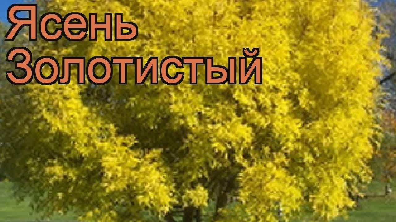 Сосна обыкновенная: описание, выращивание, свойства и посадка дерева. советы по уходу и характеристика дерева (85 фото)