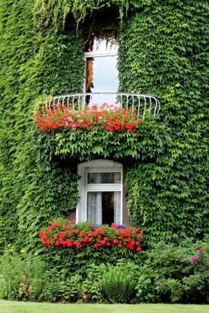 Секреты и методики вертикального озеленения